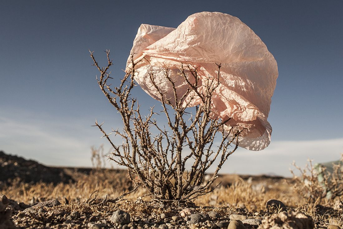 """aus der Serie """"Plastic Trees"""", 2014 © Eduardo Leal"""