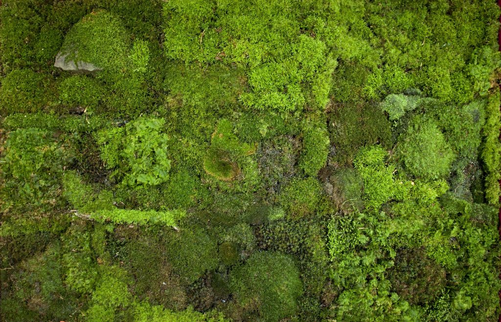 © Andrea Büttner, Moss Garden, 2014