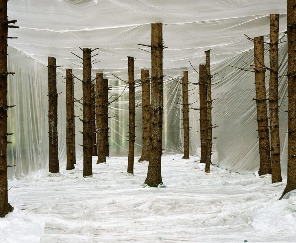 Markus Guschelbauer, Plastic Nature, 2011 © Courtesy of Photon Gallery.