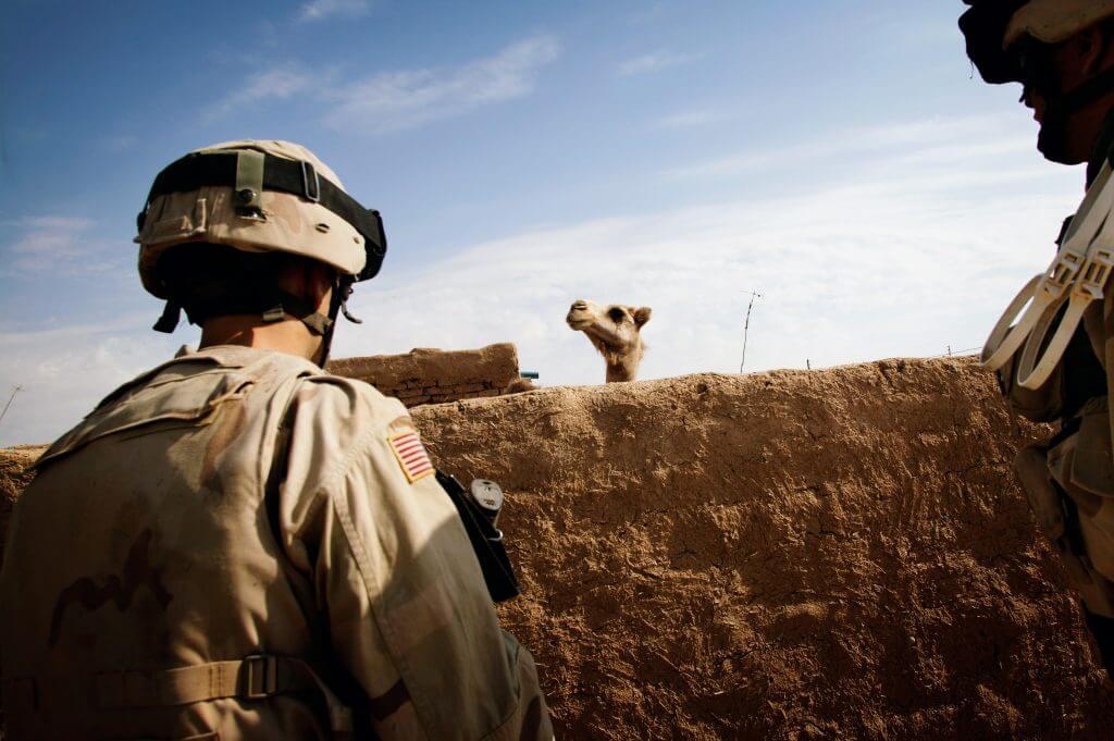 """""""Kamele!"""" ist ein Ausruf, der oft von amerikanischen Soldaten zu hören ist, wenn eines der Tiere gesichtet wird. 1. Juni 2005, Ba'aj, Nineveh, Irak © Christoph Bangert"""