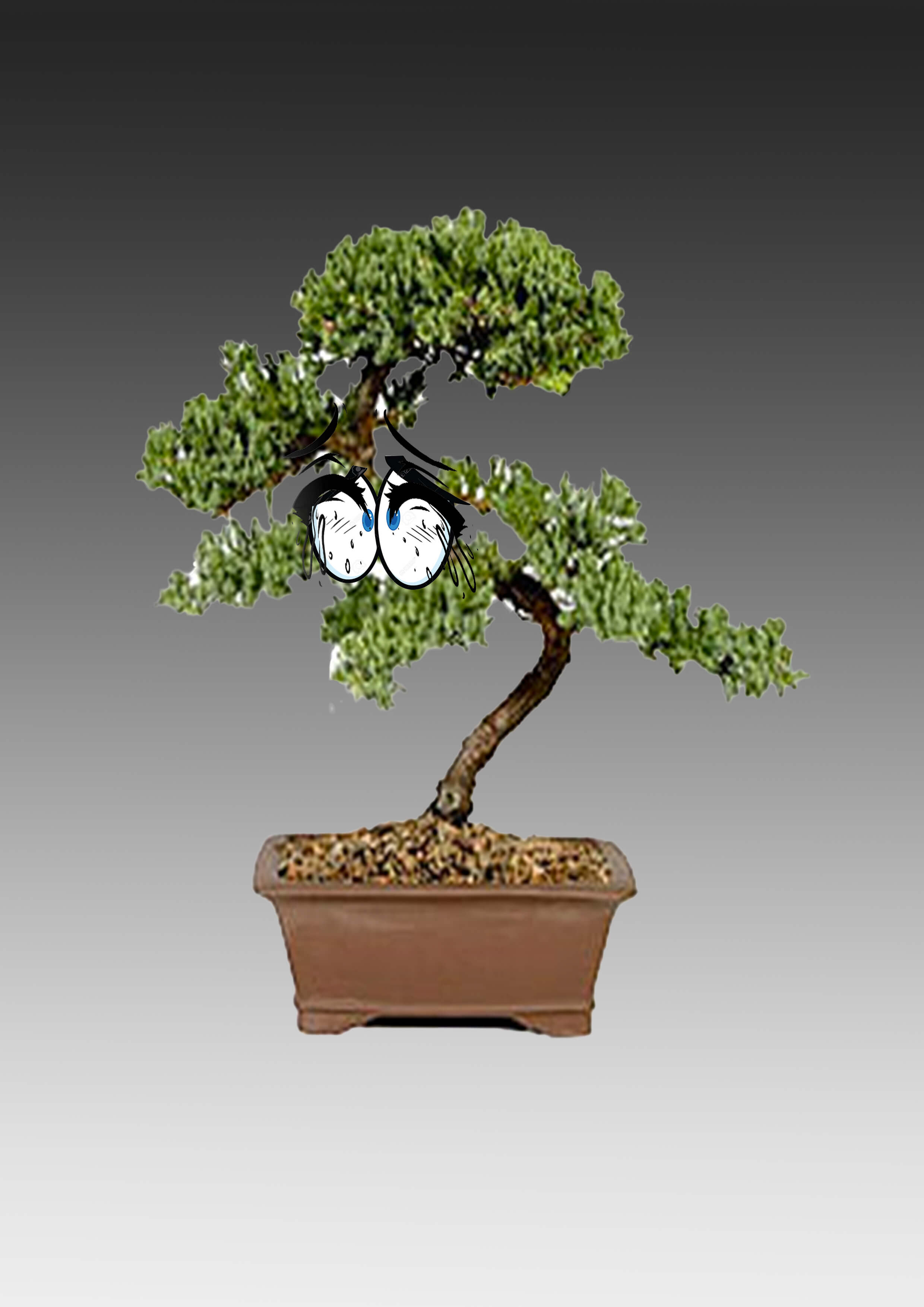 Catherine Biocca_Bonsai Feeling_2017