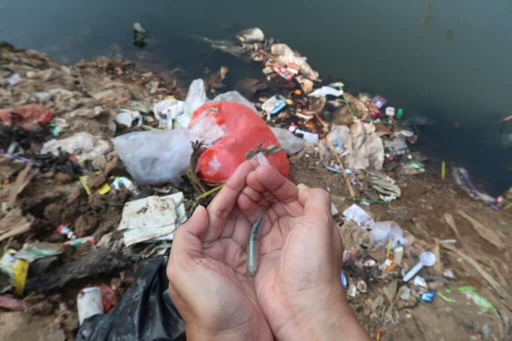 Jemand hält einen kleinen Fisch in den Händen. Im Hintergrund sind verschmutztes Wasser und Müll zu sehen.