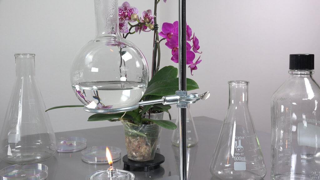 Dieses Bild ist ein Filmstill der Arbeit The Flavor Genome von Anicka Yi. Zu sehen ist ein wissenschaftlicher Aufbau mit Reagenzgläsern und eine blühende Topfpflanze im Hintergrund