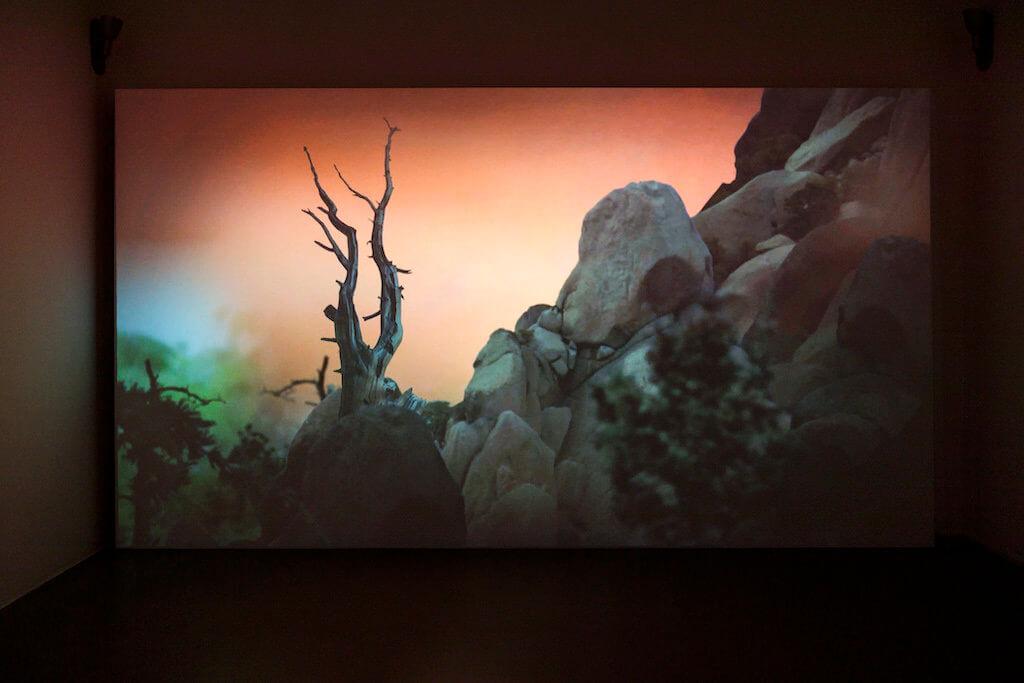 Zu sehen ist eine Leinwand auf der die Video-Arbeit Mastering Bambi von Persijn Broersen und Margit Lukács zu sehen ist. Man sieht einen Baum und Felsen vor einem roten Hintergrund.