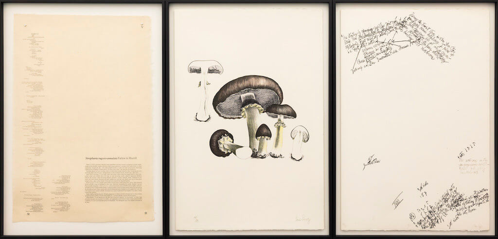 """Zu sehen sind drei Seiten des """"Mushroom Books"""" von John Cage. Man sieht Zeichnungen und Schrift, in der Mitte sind große Pilze zu sehen."""