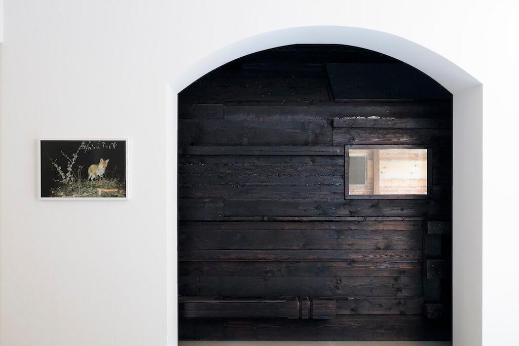 """Zu sehen sind zwei Arbeiten: Auf der linken Seite sieht man das Foto eines urbanen Fuchses. Rechts sieht man einen Teil der Installation """"Im Tiefen Wald"""" von Hans Schabus."""