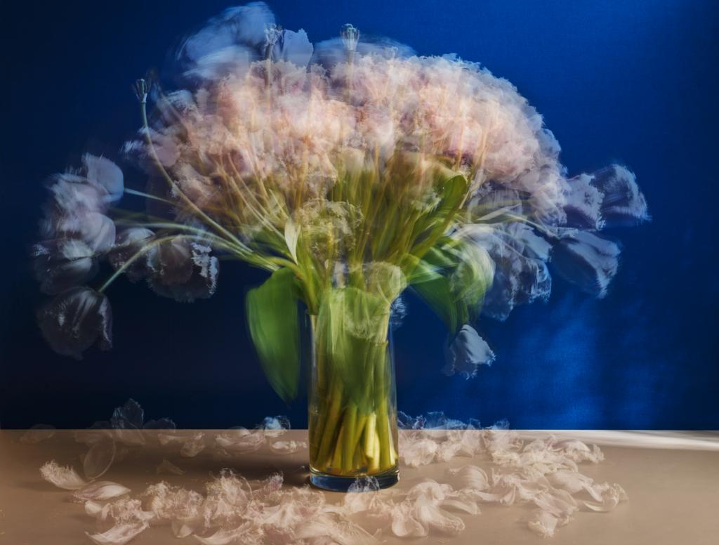 Überlagerung verschiedener blüh- bzw. verwelkungszustände eines weißen Blumenstrauß vor blauer Wand.