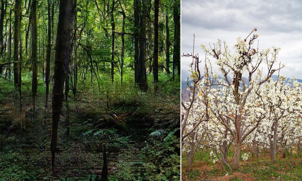 Links eine Arbeit von Andreas Greiner, es ist ein Wald zu sehen. Rechts eine Arbeit von Maximilian Prüfer mit einem Birnbaum im Bild.