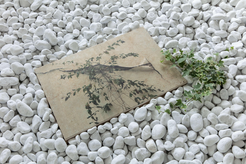 Grüne Pflanze und Bild auf weißen Steinen.