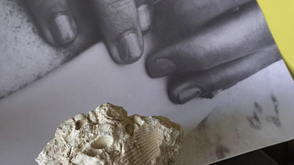 Man sieht ein Foto der Arbeit Le fossile von Maya Schweizer, zu sehen ist eine Muschel.