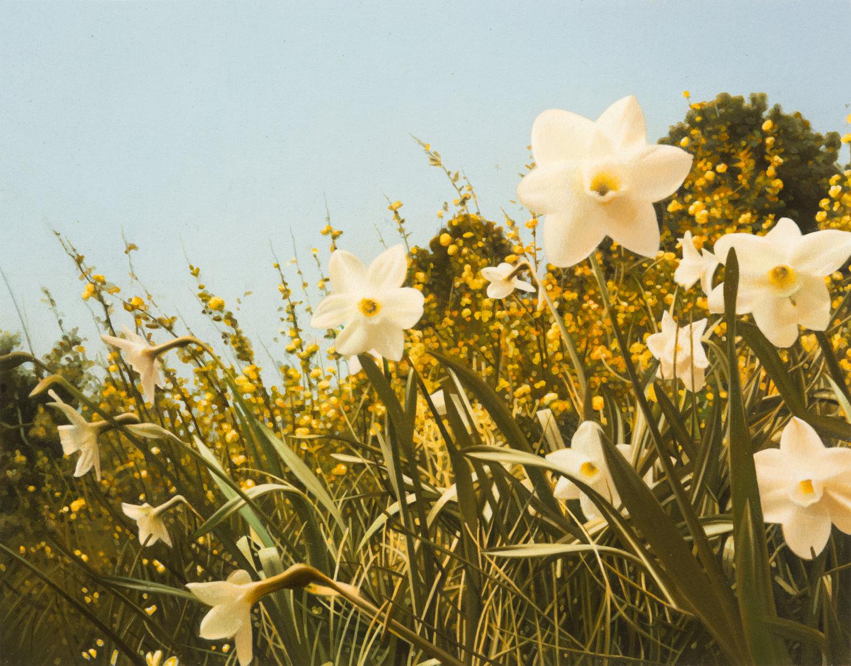 Malerei von Andrew Grassie. Zu sehen ist eine Blumenwiese mit großen Blumen im Vordergrund und vielen Grashalmen.