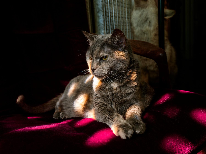 Eine graue Katze, die auf einem pinken Kissen gebettet ist und leicht von der Sonne angestrahlt wird