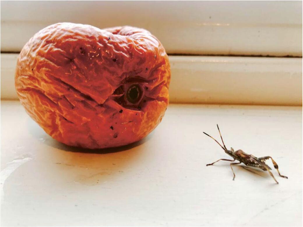 Das Bild zeigt ein Stillleben der Künstlerin Shirin Neshat, auf welchem ein verderbender Apfel und ein diesen betrachtenden Käfer zu sehen sind.