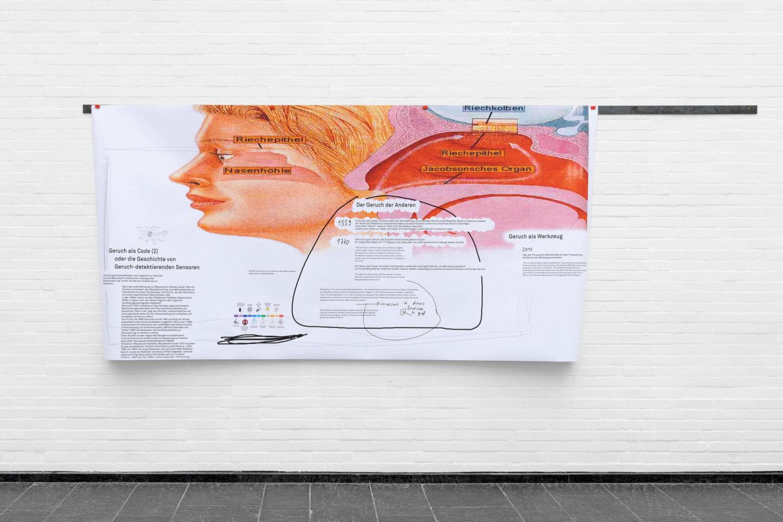 weiße Ausstellungswand, an der eine große Infografik mit Text hängt, die Grafik zeigt einen menschlichen Kopf und den Aufbau der Nase und des Geruchssinns